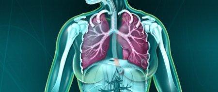 poumons_0_0